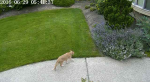 Инженер Nvidia борется с котами при помощи нейросети и поливалок. - Изображение 2
