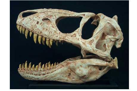 Николас Кейдж вернет монголам украденный череп тираннозавра - Изображение 1