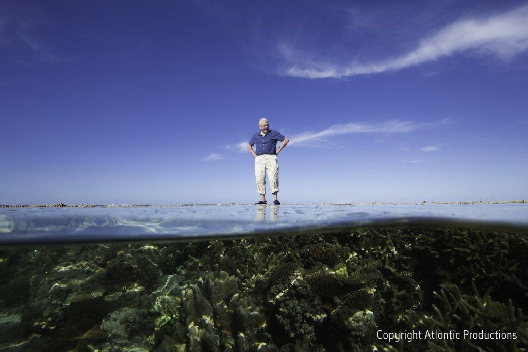 На корм рыбам: VR-экскурсия на Большой Барьерный риф от Google - Изображение 1