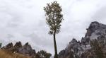 Этот мод для Skyrim сделает растительность по-настоящему реалистичной. - Изображение 9