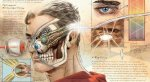 Анатомия супергероя: как устроен Супермен идругие металюди вкомиксахDC?. - Изображение 4