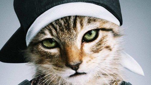 Киану Ривз озвучил котенка в фильме своего имени