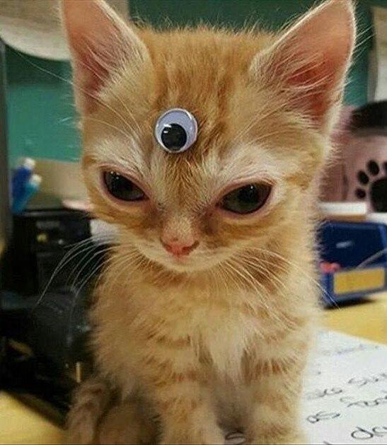 Ненависть, грусть, безысходность и коты. Вспоминаем самые забавные фотографии ко дню кошек!. - Изображение 8