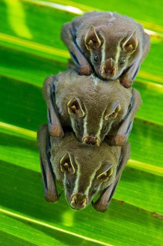 Хэллоуин еще некончился: лучшие фотографии летучих мышей отNatGeo | Канобу - Изображение 4698