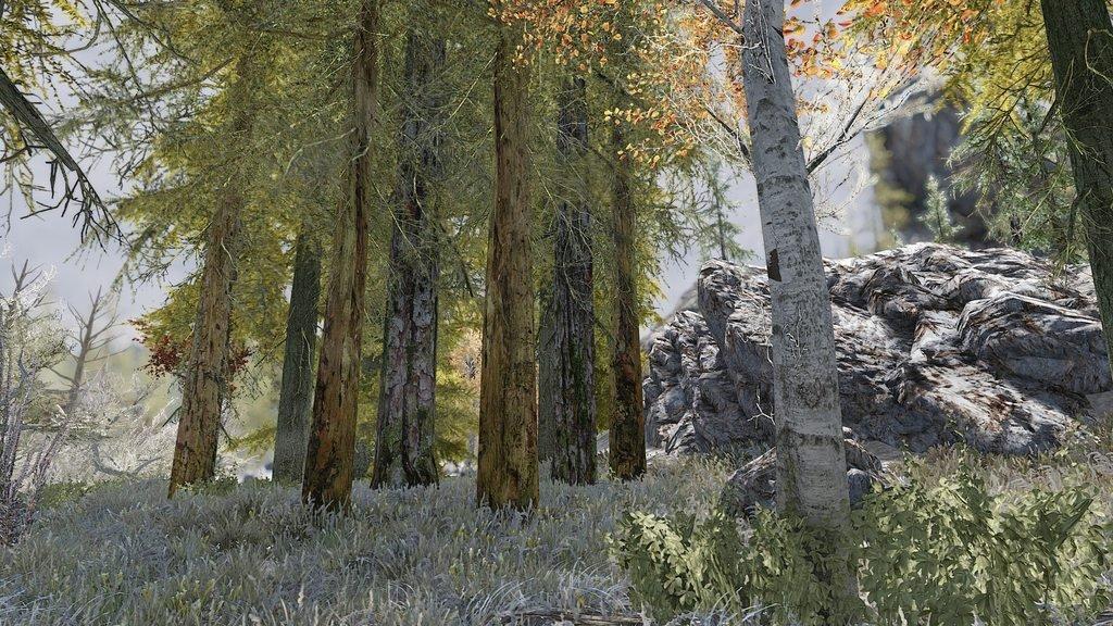 Моддер с помощью реальных фотографий воссоздал в Skyrim финский лес. - Изображение 2