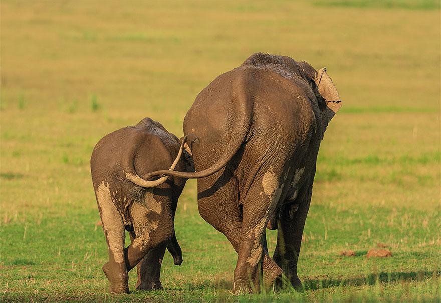 Позитивная галерея: 40 фото сконкурса насамый смешной снимок дикой природы   Канобу - Изображение 3979