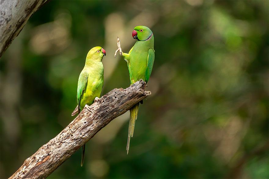 Позитивная галерея: 40 фото сконкурса насамый смешной снимок дикой природы   Канобу - Изображение 3975